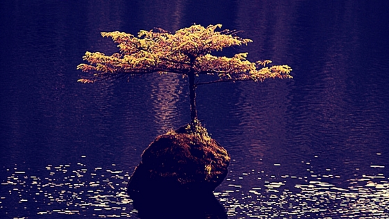 Lone tree growing in lake
